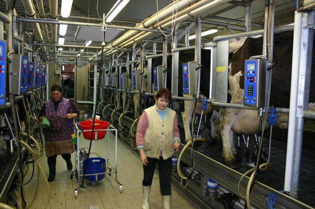 Prodej mléka | Zemědělské obchodní družstvo Božejov | Pelhřimov