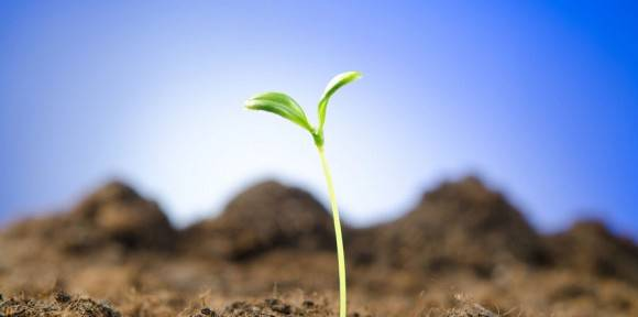 PĚSTOVÁNÍ A PRODEJ ŘEPKY, OBILNIN A BRAMBOR | Zemědělské obchodní družstvo Božejov | Pelhřimov