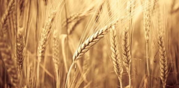 VÝROBA A PRODEJ ZEMĚDĚLSKÝCH KOMODIT | Zemědělské obchodní družstvo Božejov | Pelhřimov